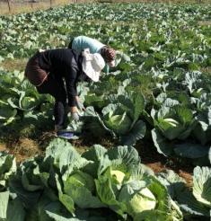 助力扶貧產業發展,溢價收購的愛心蔬菜又來啦——四川省婦幼保健院壤塘縣仁朋村精準扶貧活動系列報道之二十